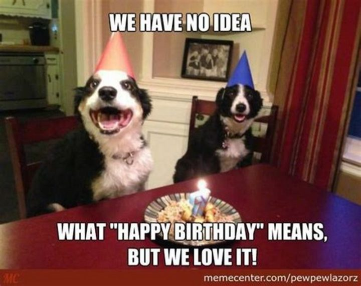 "101 Happy Birthday Dog Memes - ""We have no idea what 'Happy Birthday' means, but we love it!"""