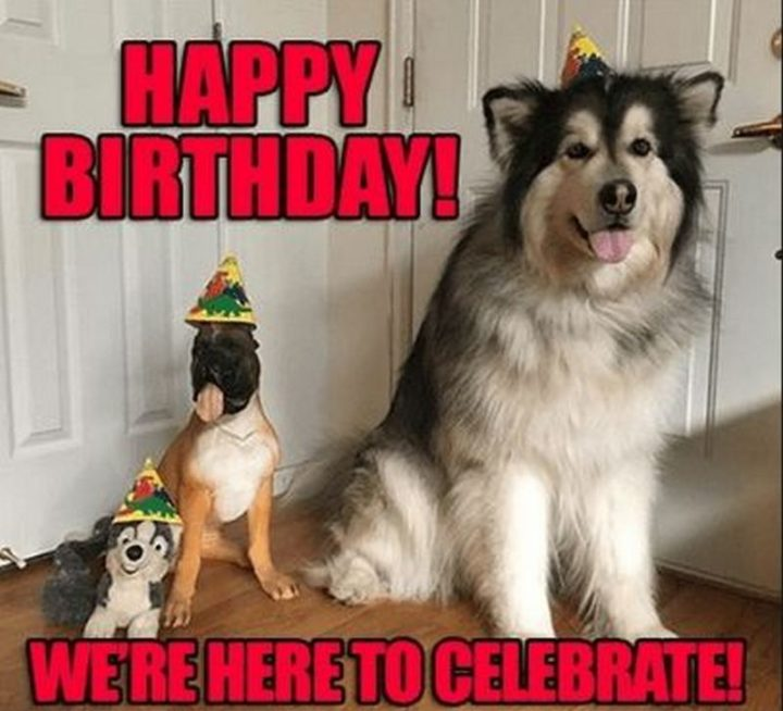 "101 Happy Birthday Dog Memes - ""Happy birthday! We're here to celebrate!"""