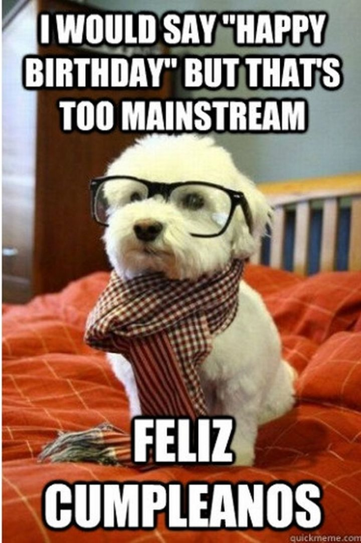 "101 Happy Birthday Dog Memes - ""I would say 'Happy Birthday' but that's too mainstream. Feliz cumpleanos."""