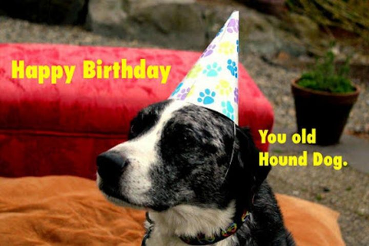 "101 Happy Birthday Dog Memes - ""Happy birthday you old hound dog."""
