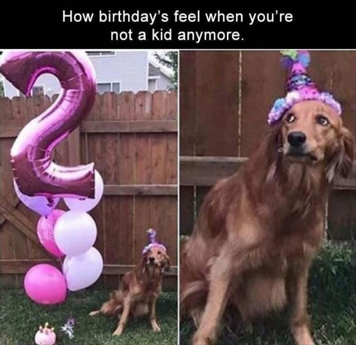 "101 Happy Birthday Dog Memes - ""How birthdays feel when you're not a kid anymore."""