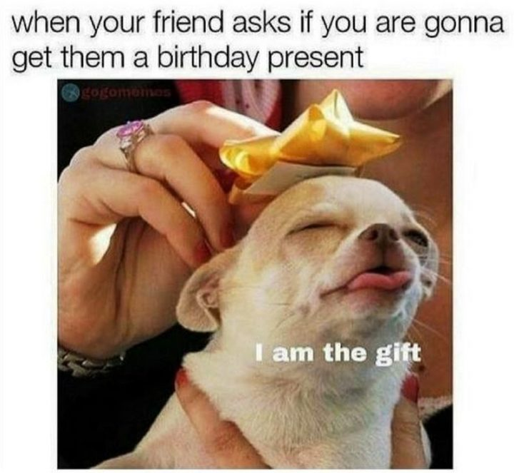 "101 Happy Birthday Dog Memes - ""When your friend asks if you are gonna get them a birthday present: I am the gift."""
