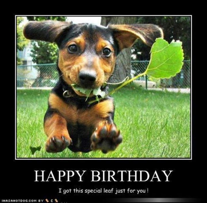 "101 Happy Birthday Dog Memes - ""Happy birthday. I got this special leaf just for you!"""