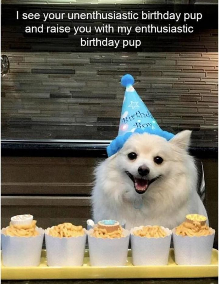 "101 Happy Birthday Dog Memes - ""I see your unenthusiastic birthday pup and raise you with my enthusiastic birthday pup."""