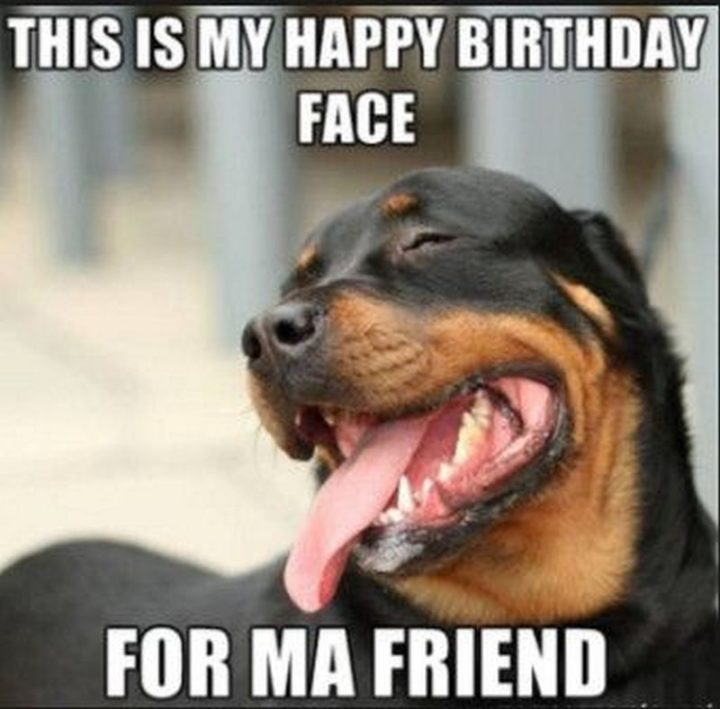 "101 Happy Birthday Dog Memes - ""This is my happy birthday face for ma friend."""