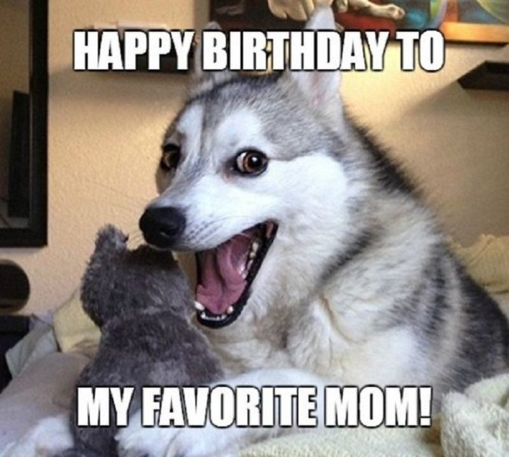 "101 Happy Birthday Dog Memes - ""Happy birthday to my favorite mom."""