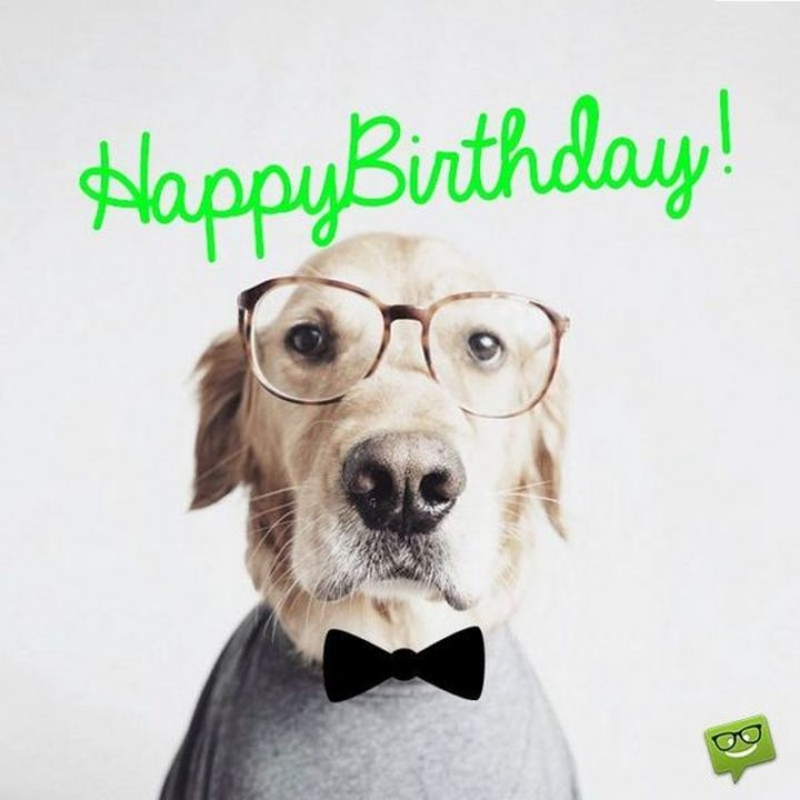"101 Happy Birthday Dog Memes - ""Happy birthday!"""