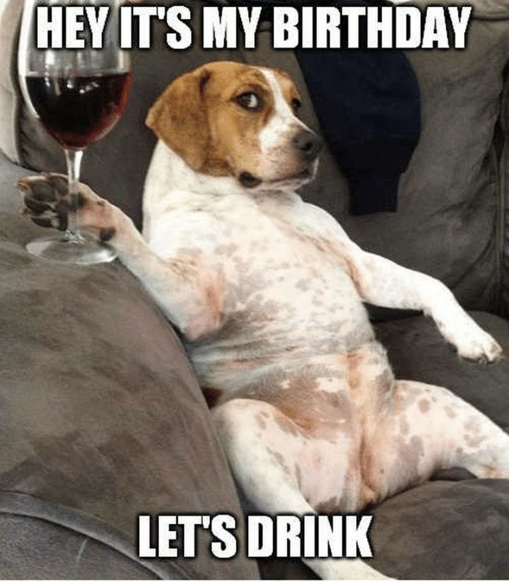 "101 Happy Birthday Dog Memes - ""Hey it's my birthday. Let's drink."""