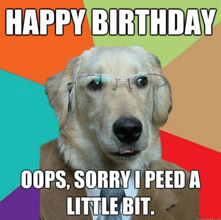 "101 Happy Birthday Dog Memes - ""Happy birthday. Oops, sorry I peed a little bit."""
