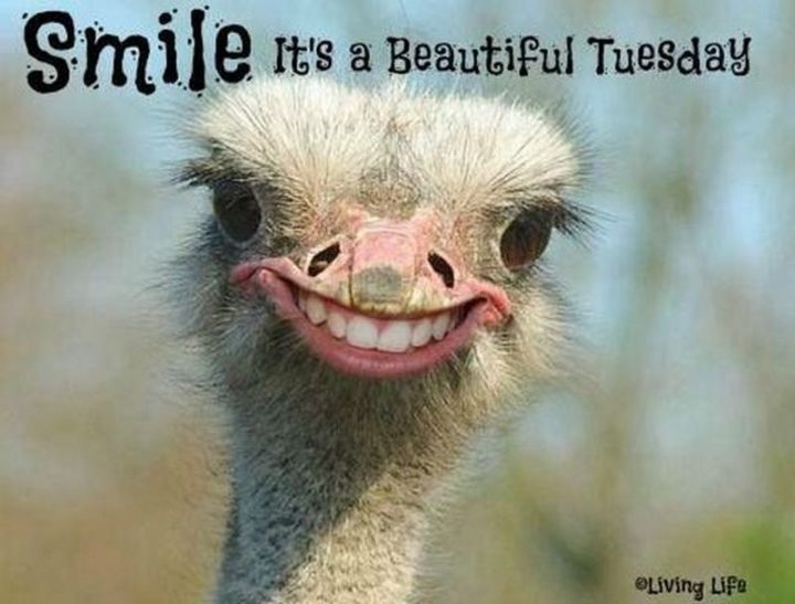 "101 Tuesday Memes - ""Smile. It's a beautiful Tuesday."""
