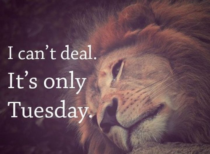 "101 Tuesday Memes - ""I can't deal. It's only Tuesday."""