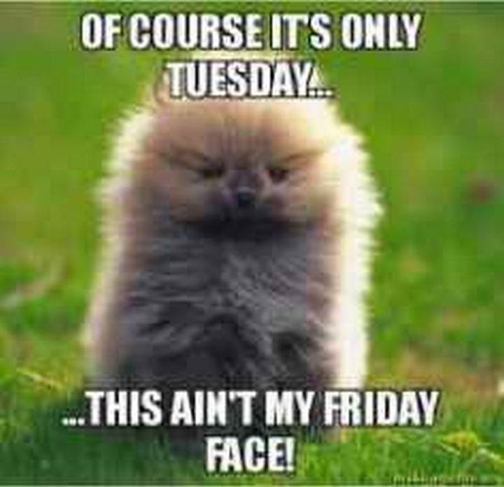 "101 Tuesday Memes - ""Of course it's only Tuesday...This ain't my Friday face!"""