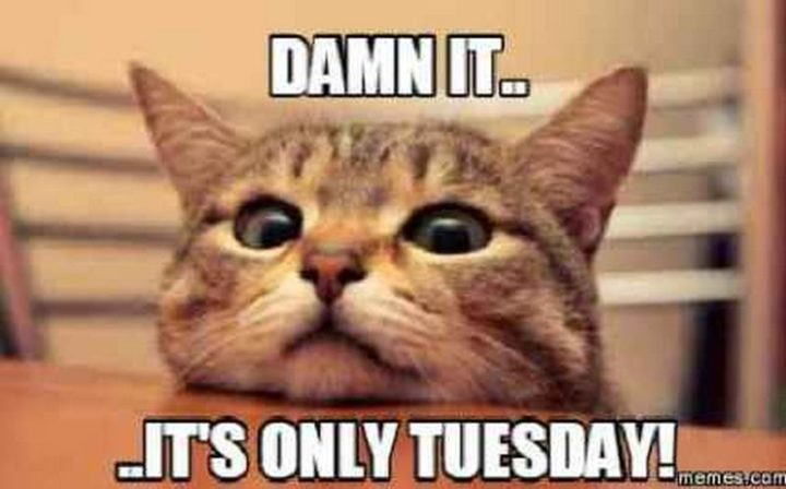 "101 Tuesday Memes - ""Damn it...It's only Tuesday!"""