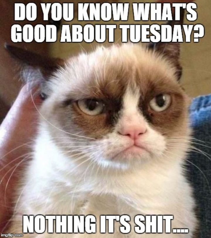 "101 Tuesday Memes - ""Do you know what's good about Tuesday? Nothing. It's shit..."""