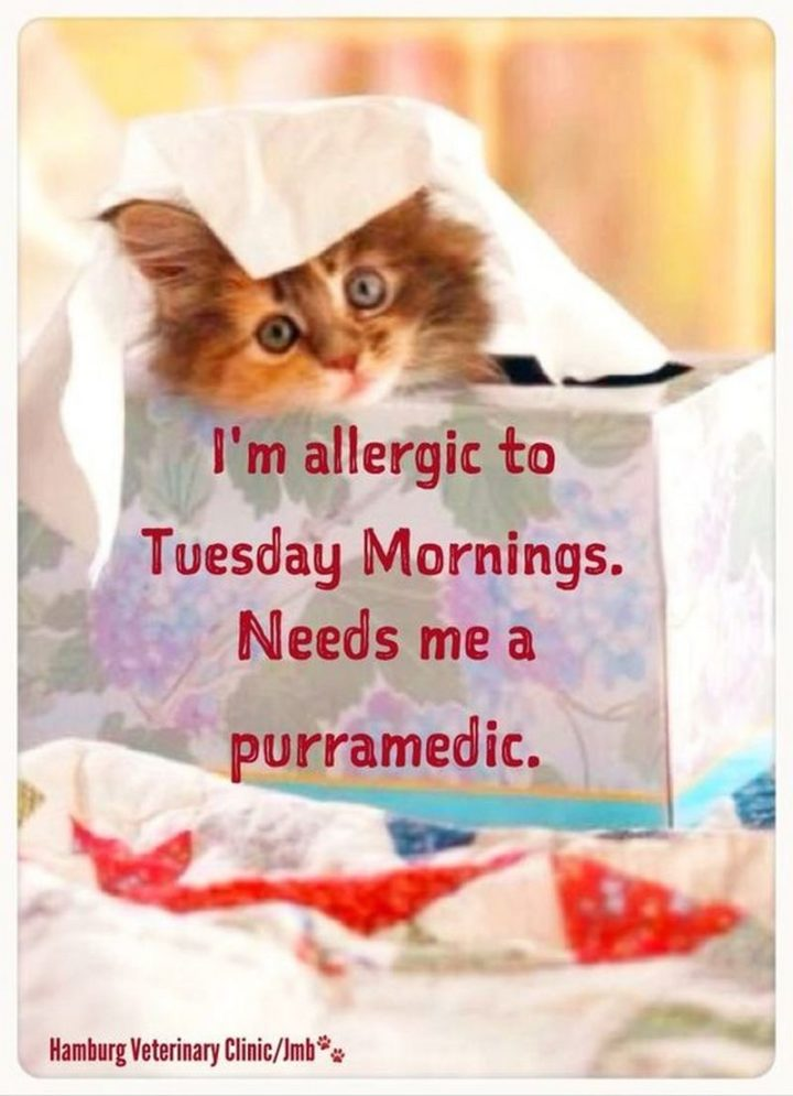 "101 Tuesday Memes - ""I'm allergic to Tuesday morning. Needs me a purramedic."""