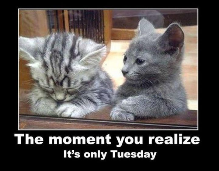 "101 Tuesday Memes - ""The moment you realize it's only Tuesday."""