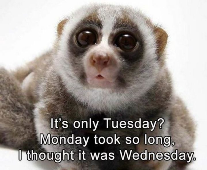 "101 Tuesday Memes - ""It's only Tuesday? Monday took so long, I thought it was Wednesday."""
