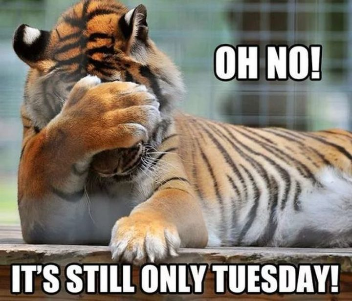 "101 Tuesday Memes - ""Oh no! It's still only Tuesday!"""