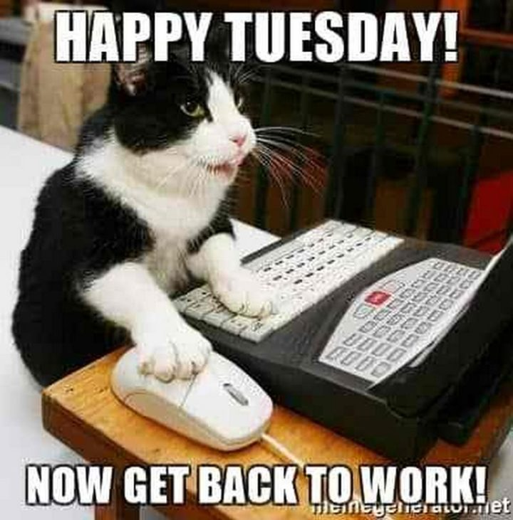 "101 Tuesday Memes - ""Happy Tuesday! Now get back to work!"""