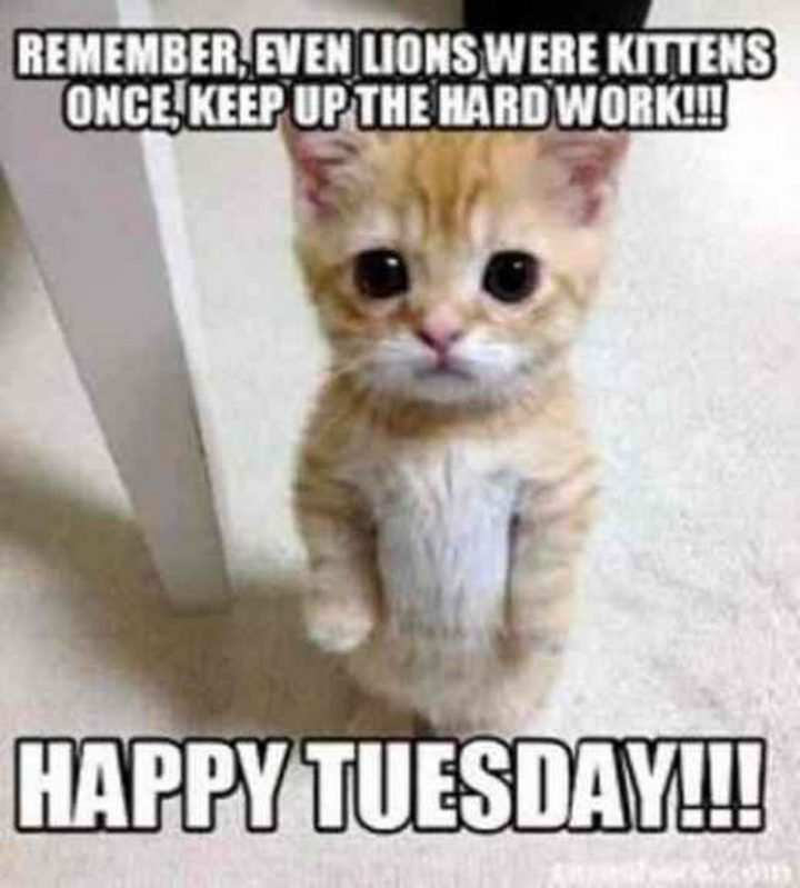 "101 Tuesday Memes - ""Remember, even lions were kittens once, keep up the hard work!!! Happy Tuesday!!!"""