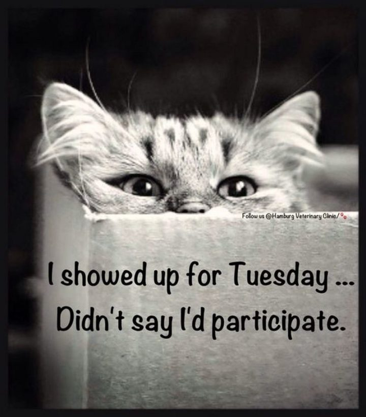 "101 Tuesday Memes - ""I showed up for Tuesday...Didn't say I'd participate."""