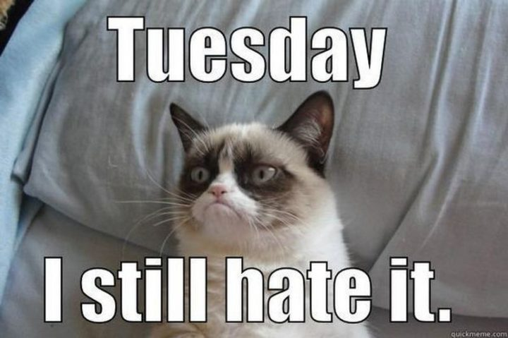 "101 Tuesday Memes - ""Tuesday. I still hate it."""
