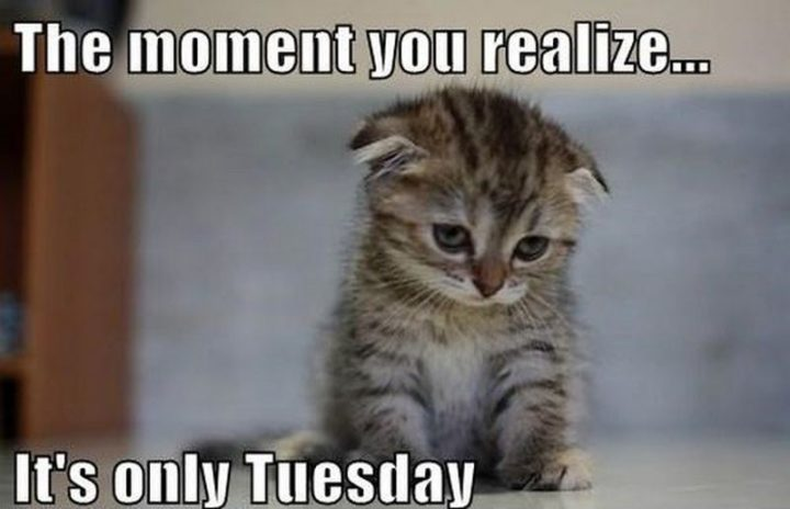 "101 Tuesday Memes - ""The moment you realize...It's only Tuesday."""