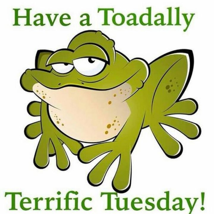 "101 Tuesday Memes - ""Have a toadally terrific Tuesday!"""