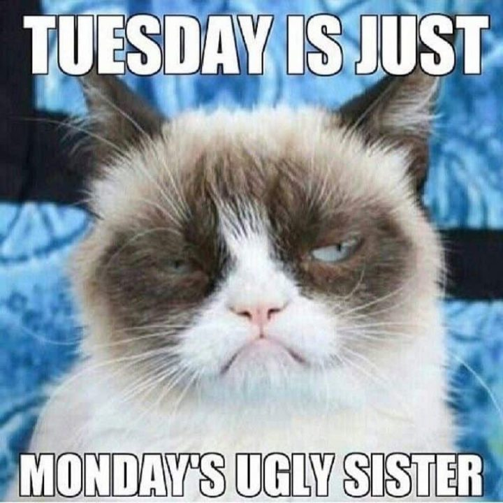 "101 Tuesday Memes - ""Tuesday is just Monday's ugly sister."""