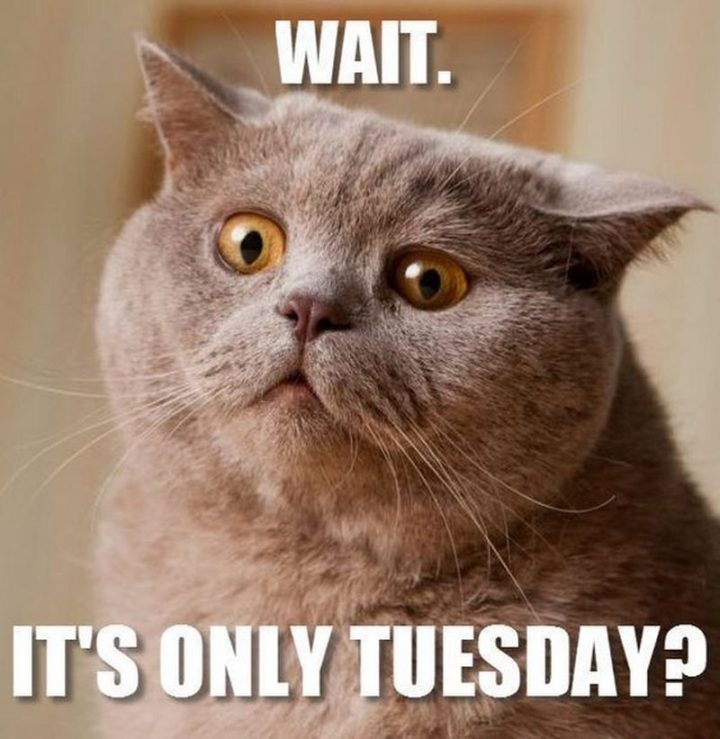 "101 Tuesday Memes - ""Wait. It's only Tuesday?"""