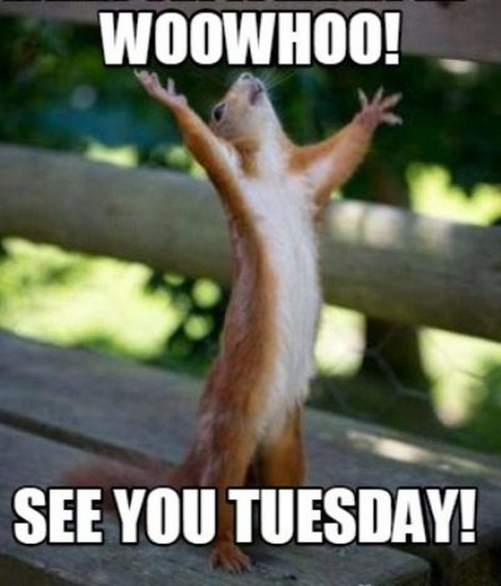 "101 Tuesday Memes - ""Woowhoo! See you Tuesday!"""