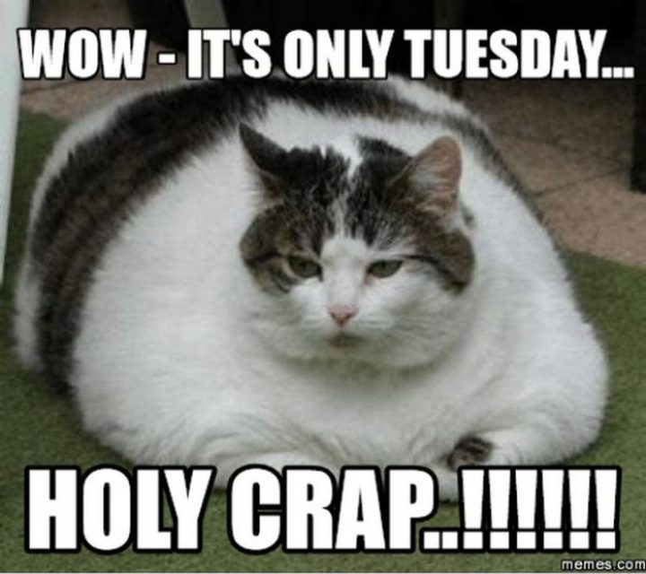 "101 Tuesday Memes - ""Wow. It's only Tuesday...Holy crap!!!!!"""