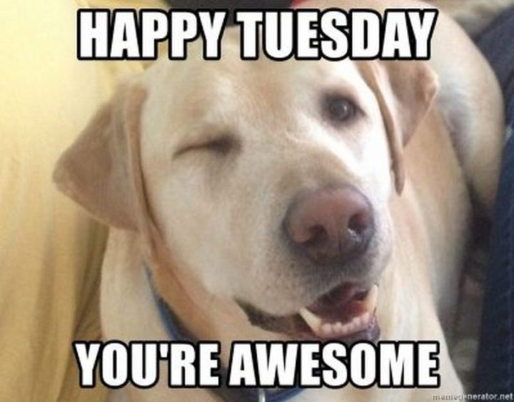 "101 Tuesday Memes - ""Happy Tuesday. You're awesome."""