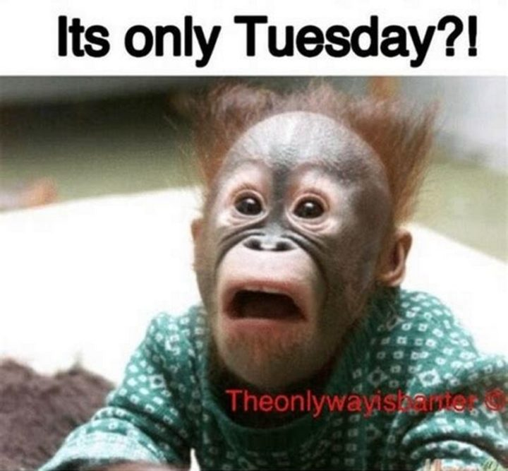 "101 Tuesday Memes - ""It's only Tuesday?!"""