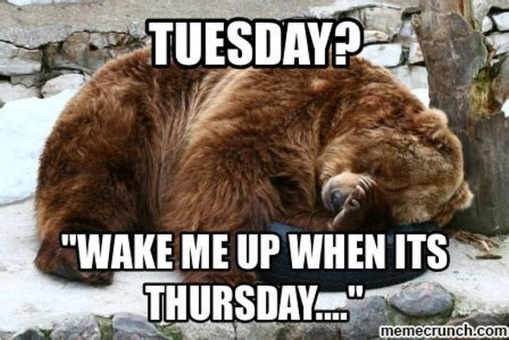 "101 Tuesday Memes - ""Tuesday? Wake me up with it's Thursday..."""