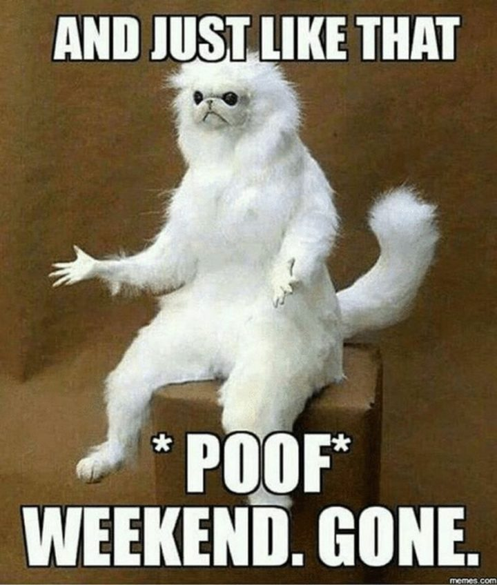 """101 Saturday Memes - """"And just like that *poof* weekend. Gone."""""""
