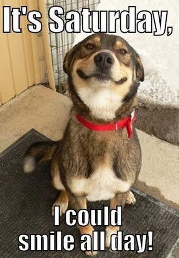 """101 Saturday Memes - """"It's Saturday, I could smile all day!"""""""