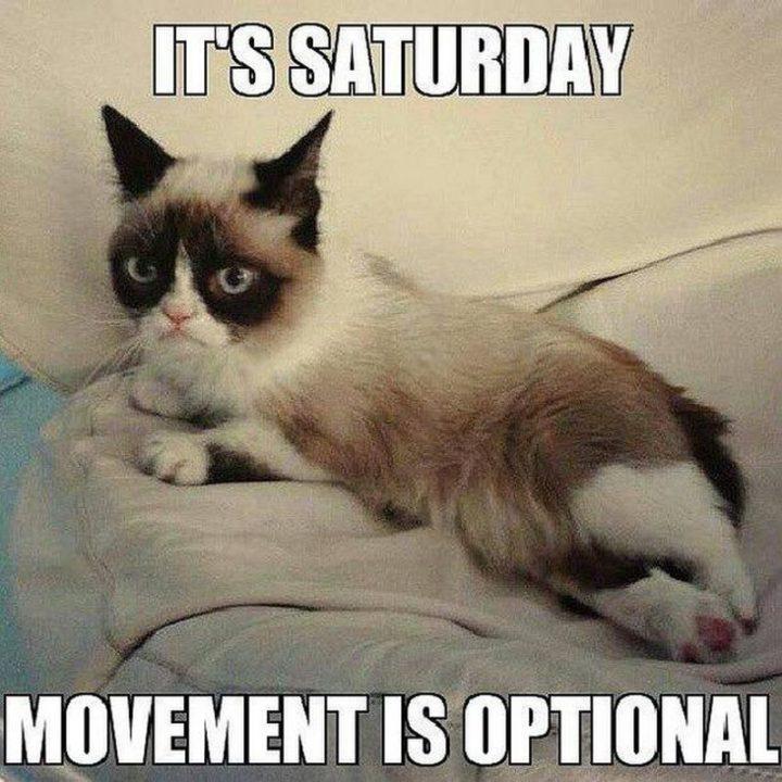 "101 Saturday Memes - ""It's Saturday. Movement is optional."""