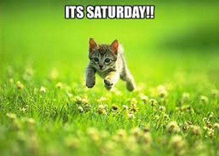 "101 Saturday Memes - ""It's Saturday."""