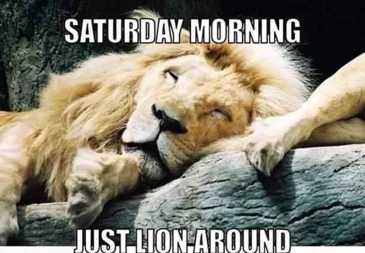 "101 Saturday Memes - ""Saturday morning. Just lion around."""