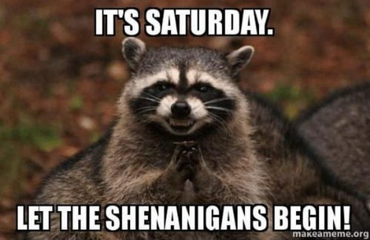 "101 Saturday Memes - ""It's Saturday. Let the shenanigans begin!"""