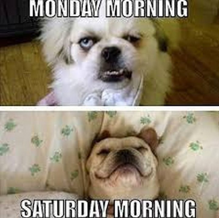 "101 Saturday Memes - ""Monday morning. Saturday morning."""