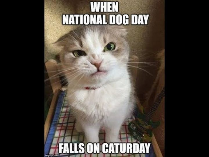 """101 Saturday Memes - """"When national dog day falls on caturday."""""""