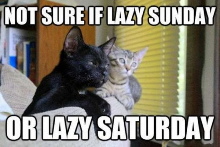 """101 Saturday Memes - """"Not sure if lazy Sunday or lazy Saturday."""""""