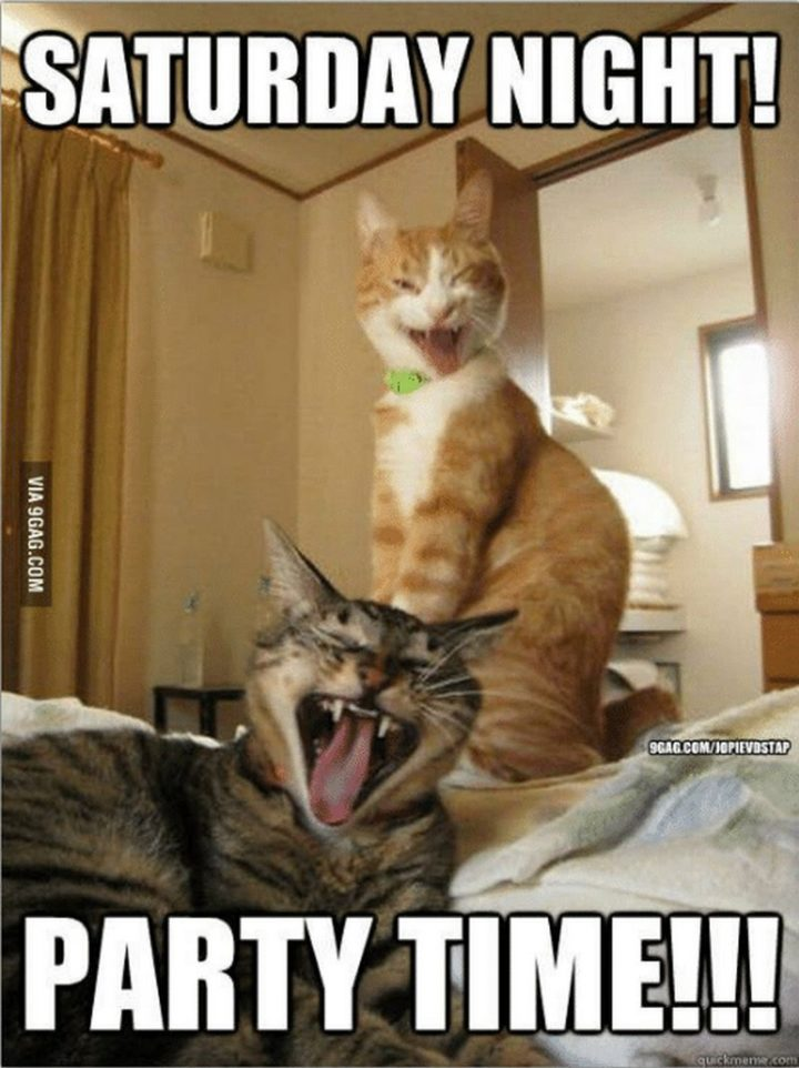 """101 Saturday Memes - """"Saturday night! Party time!!!"""""""