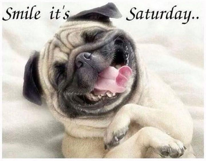 "101 Saturday Memes - ""Smile it's Saturday..."""