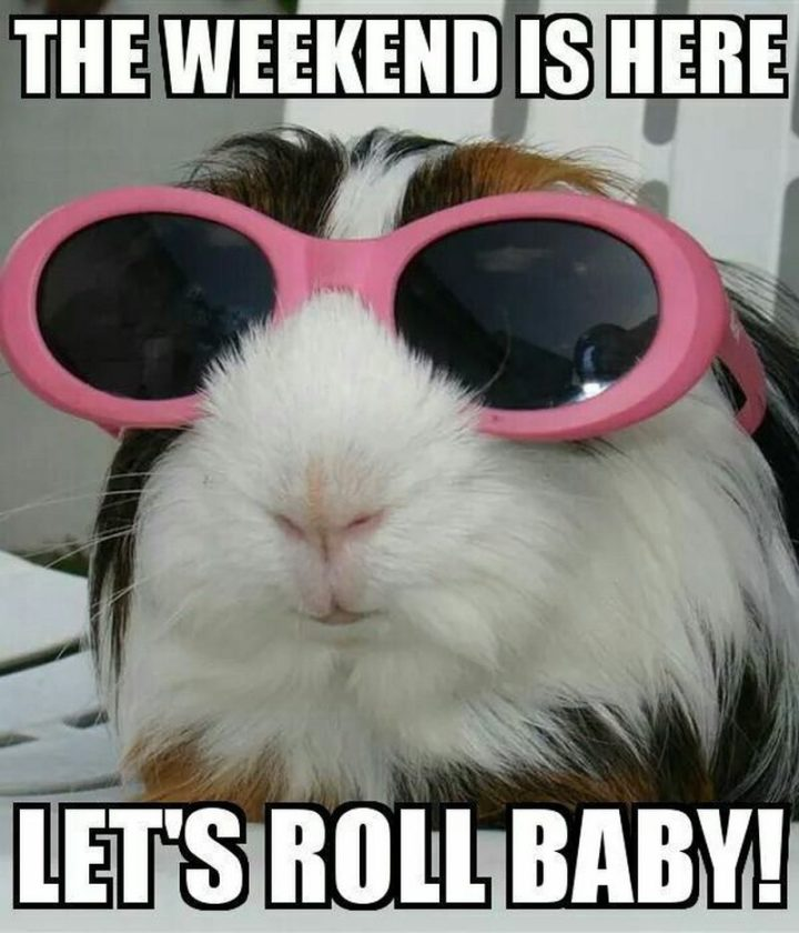 """101 Saturday Memes - """"The weekend is here. Let's roll baby!"""""""