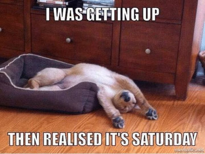 """101 Saturday Memes - """"I was getting up then realized it's Saturday."""""""