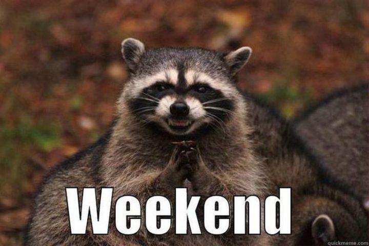 """101 Saturday Memes - """"Weekend."""""""