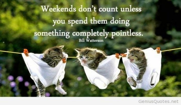 """101 Saturday Memes - """"Weekends don't count unless you spend them doing something completely pointless."""" - Bill Watterson"""